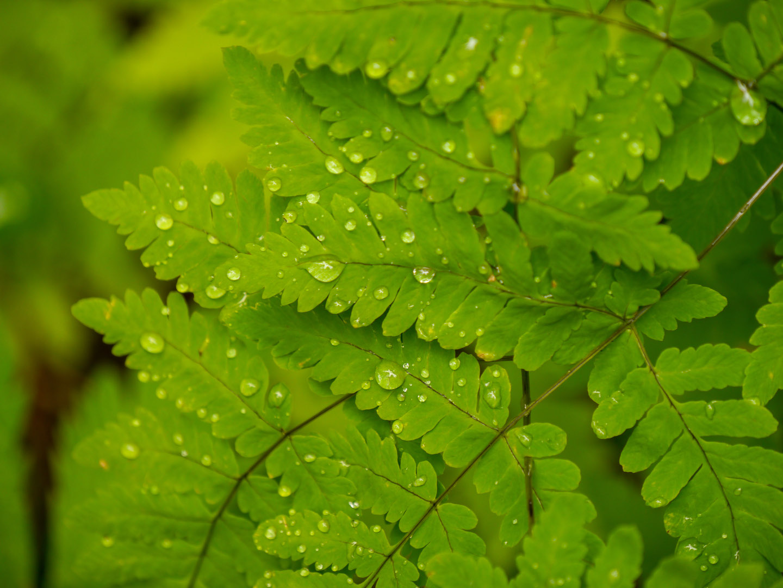 norwegen blatt regentropfen regen grün