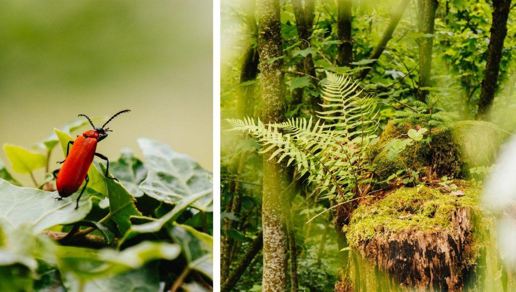 heidiland walensee wandern insekt wald walenstadt