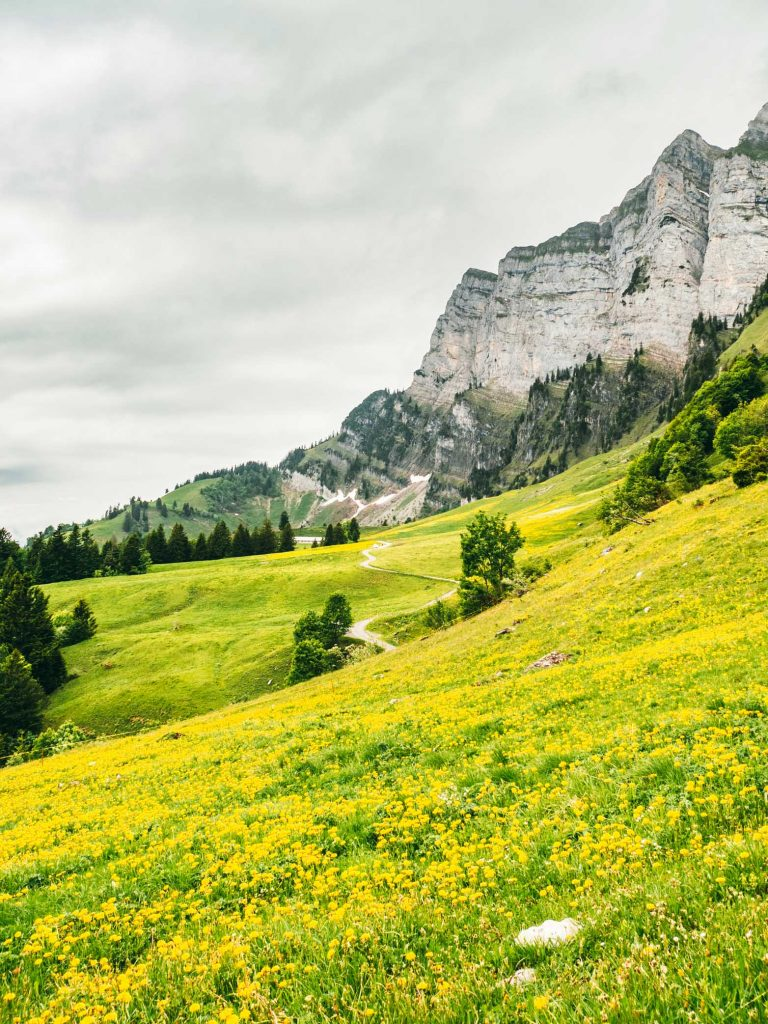 schweiz heidiland walensee walenstadt tschingla berge wiese blumen