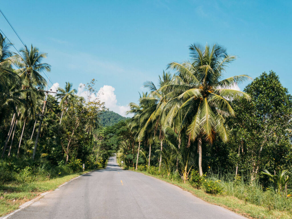 thailand koh-chang island scooter-tour road palm-tree