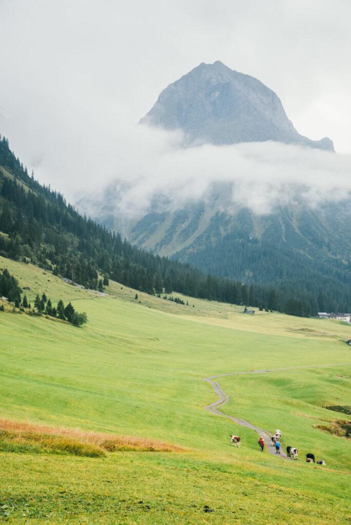 vorarlberg lech zürs lechweg zweite-etappe wolken berg wandern kühe
