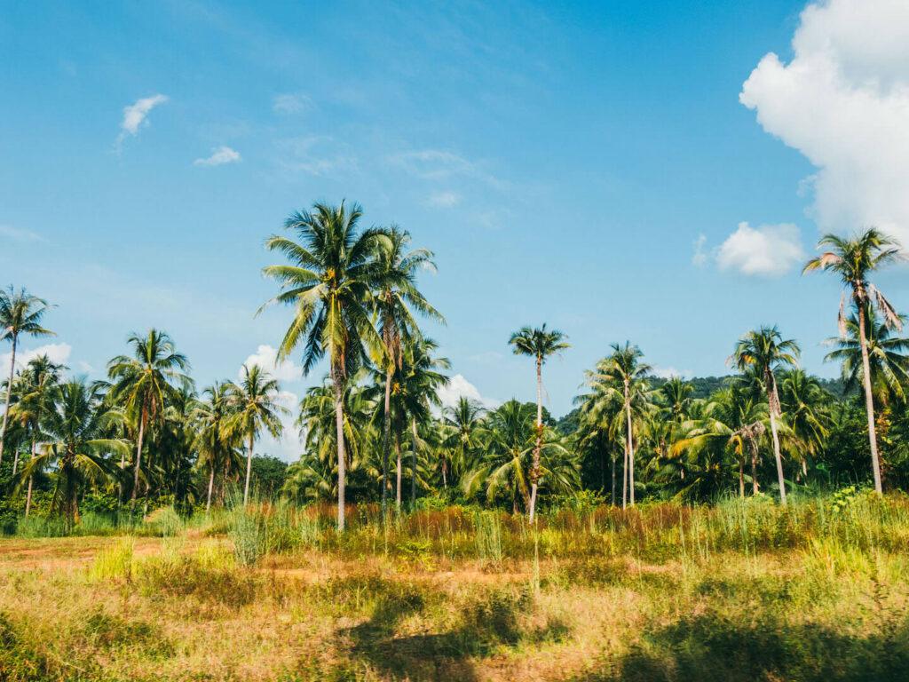 thailand koh-chang insel roller-tour straße palme wolke