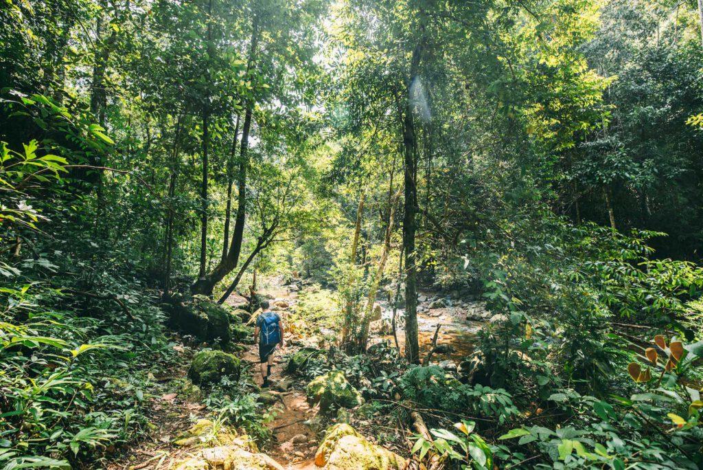 thailand koh-chang insel roller-tour dschungel wandern mann