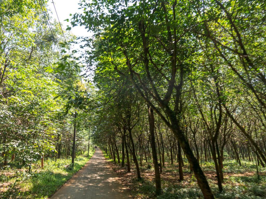 thailand koh-mak scooter-tour rubber-plant trees road