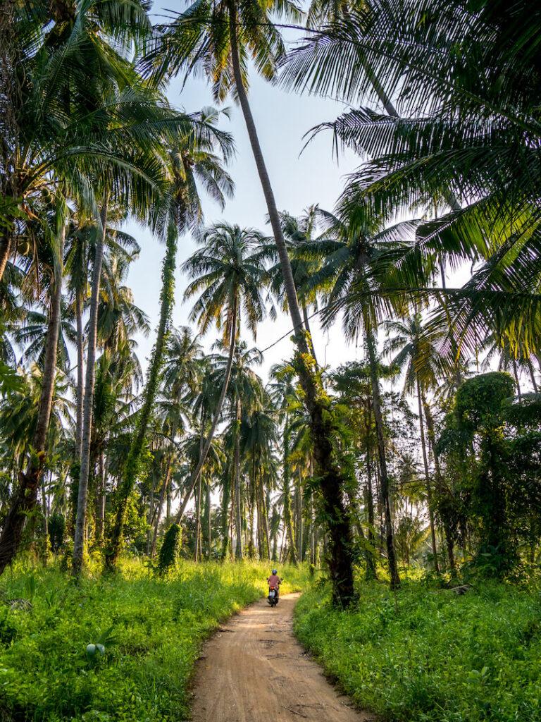 thailand koh-mak beach scooter palm-tree woman