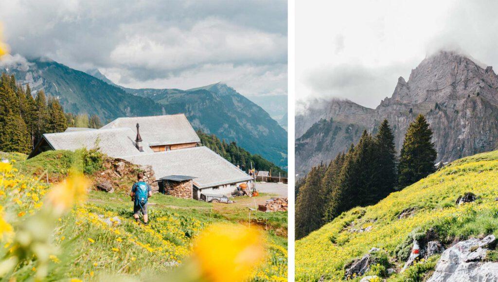 switzerland heidiland tschingla mountain men hiking flowers
