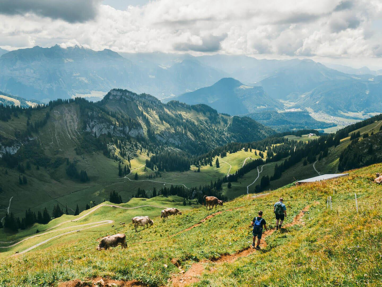 vorarlberg bregenzerwald bezau winterstaude hiking clouds cows man