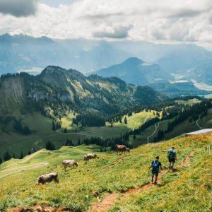 vorarlberg bregenzerwald bezau winterstaude wandern berge wiese man kühe
