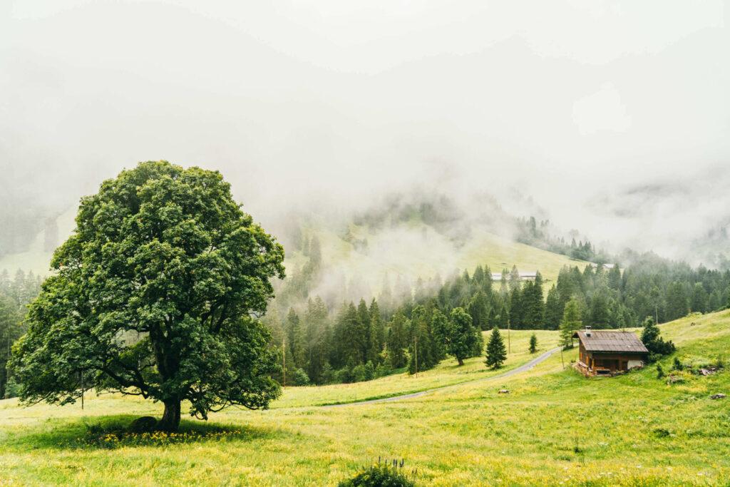 heidiland flumserberg spitzmeilenhütte wandern berge wolken baum