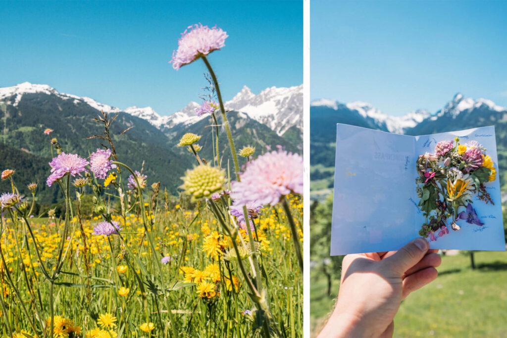 vorarlberg montafon bartholomäberg hiking bees schruns spring lawn flowers