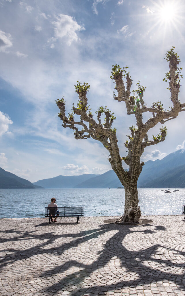 switzerland ticino ascona lago-maggiore man lake mountain tree