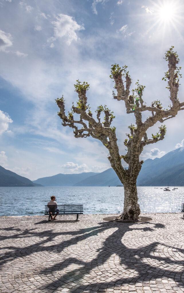 schweiz tessin ascona lago-maggiore see bank mann baum