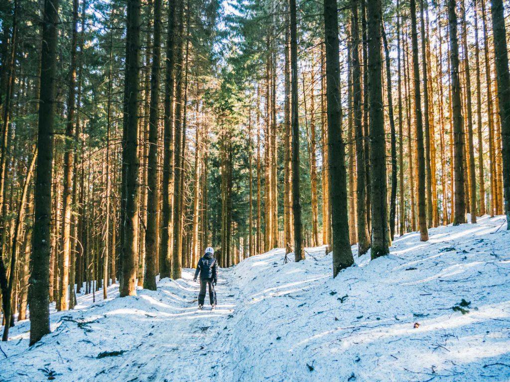 vorarlberg rheintal frastanz ski-fahren winter schnee berge piste wald