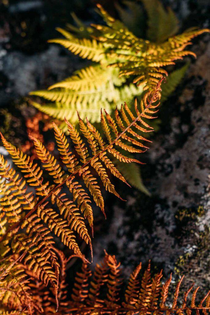 vorarlberg montafon berge aplguesalpe grasjochhütte rundwanderung pflanze