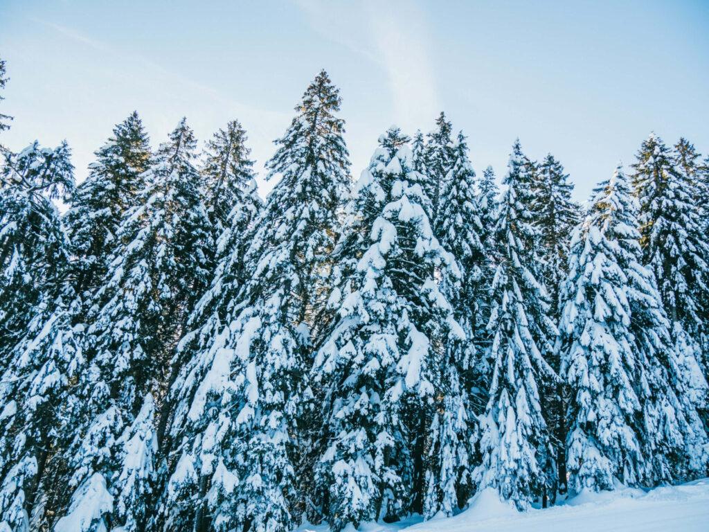 vorarlberg bödele schwarzenberg bregenzerwald tree skiing woman